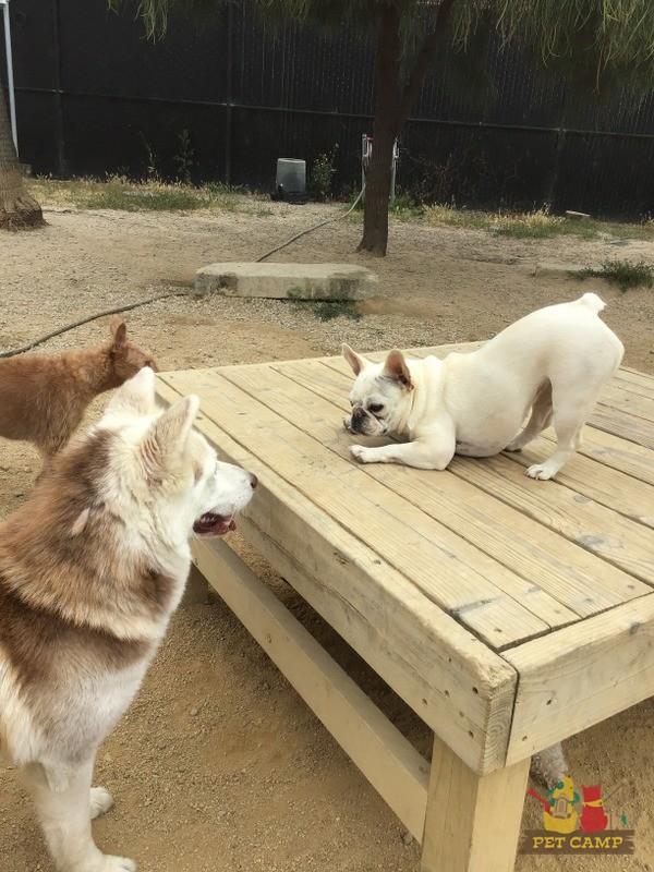 doggie daycare savanah
