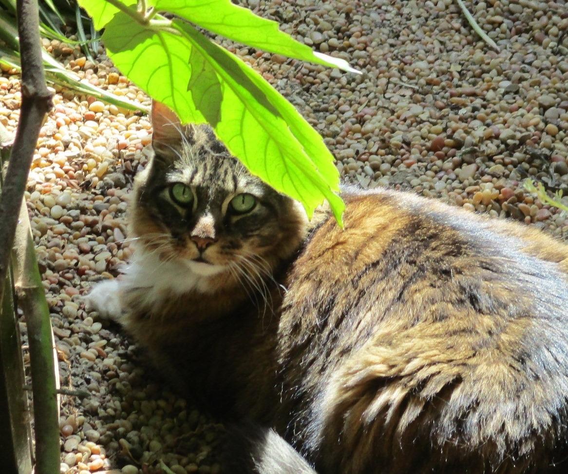 cat in safari garden