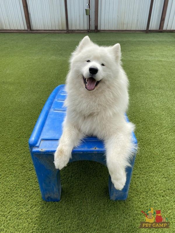 happy fluffy dog