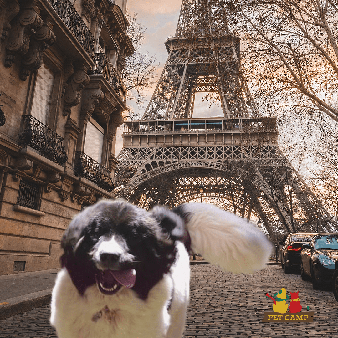 Camper in Paris - Pet Camp World Tour