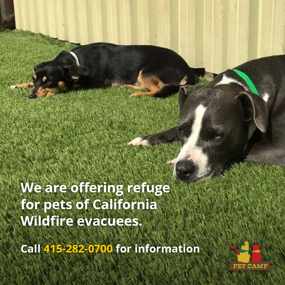 Free pet boarding for wildfire refugees