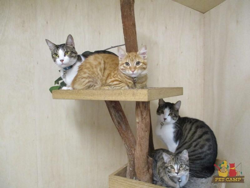 Cat squad at Pet Camp
