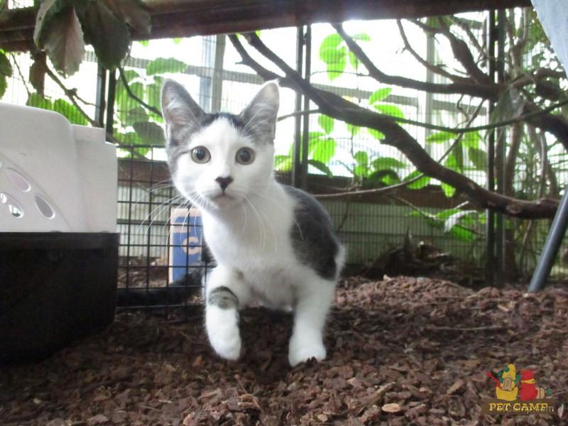 cat at cat safari