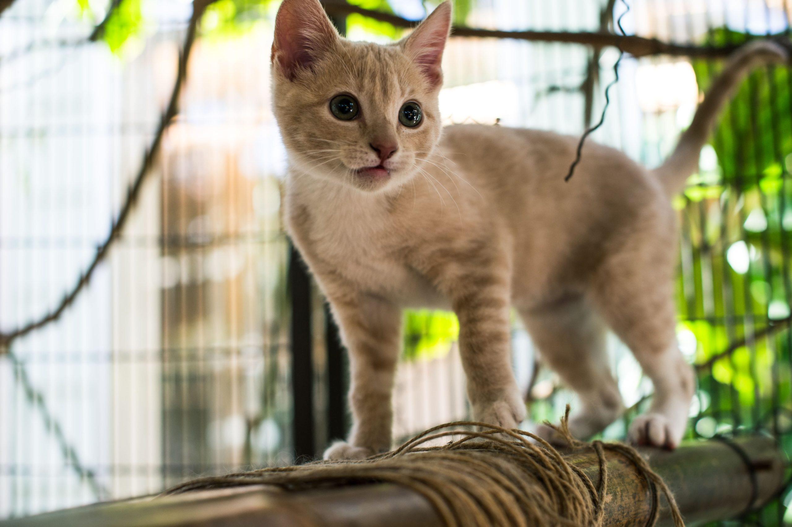 Kitty at Cat Safari