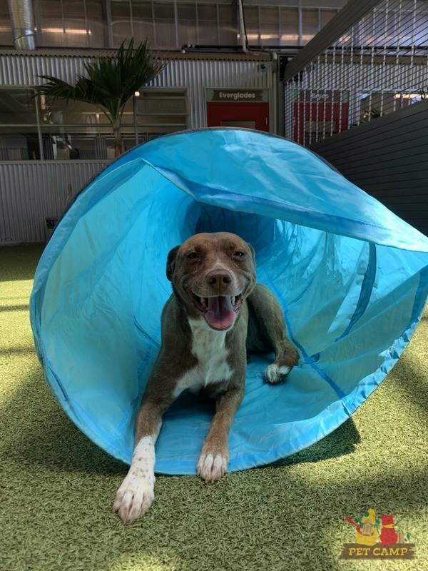 dog training smiling