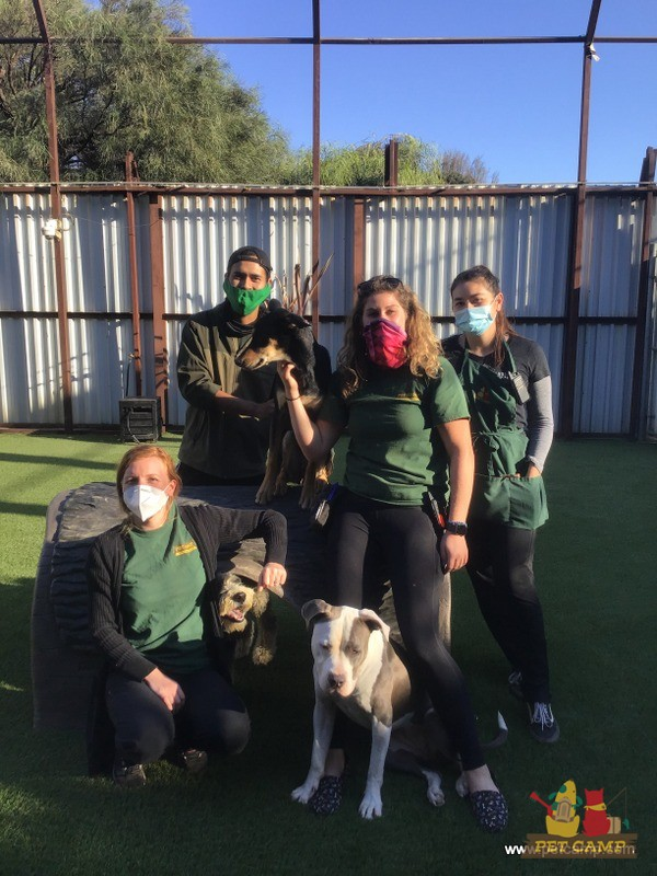pet camp team