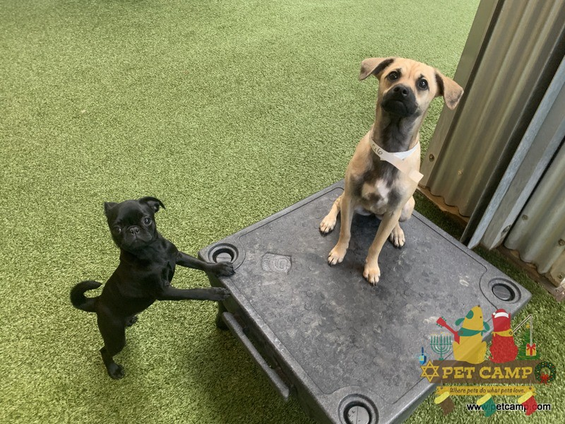 puppies learn