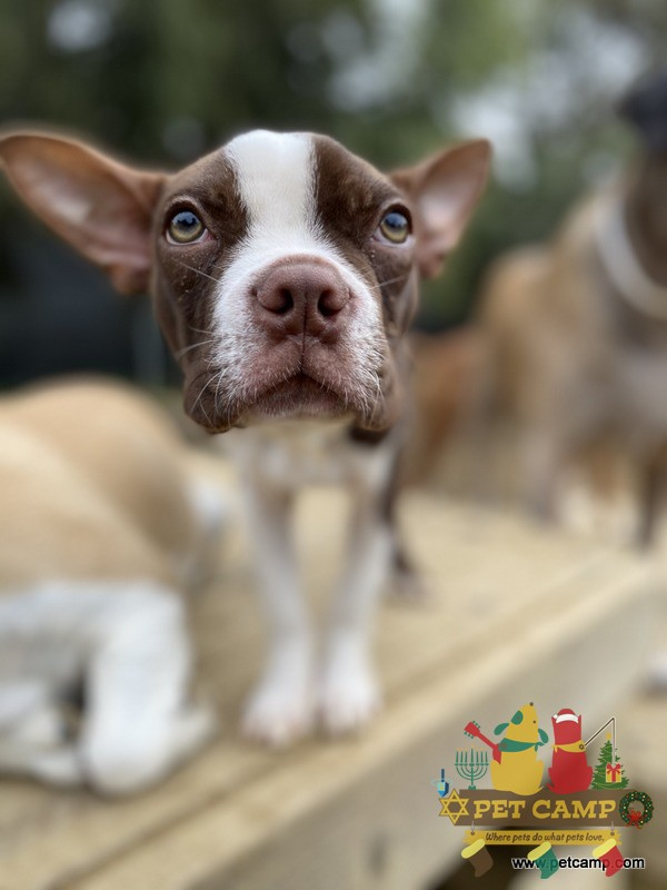 puppy at Pet Camp
