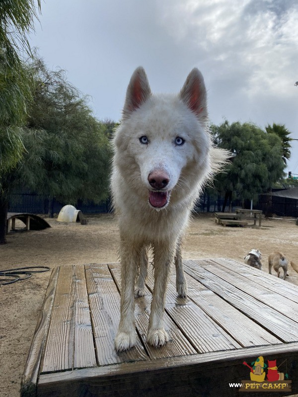 smiling pup in savannah