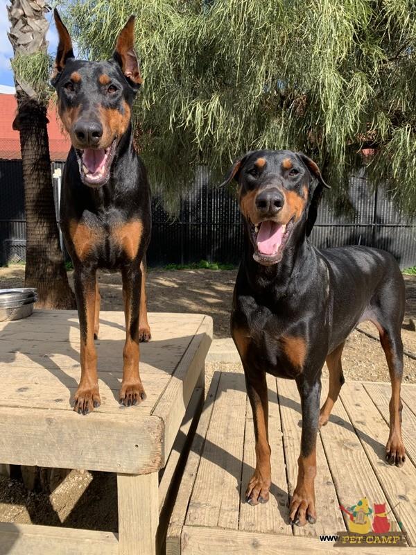 happy doggies in Savannah