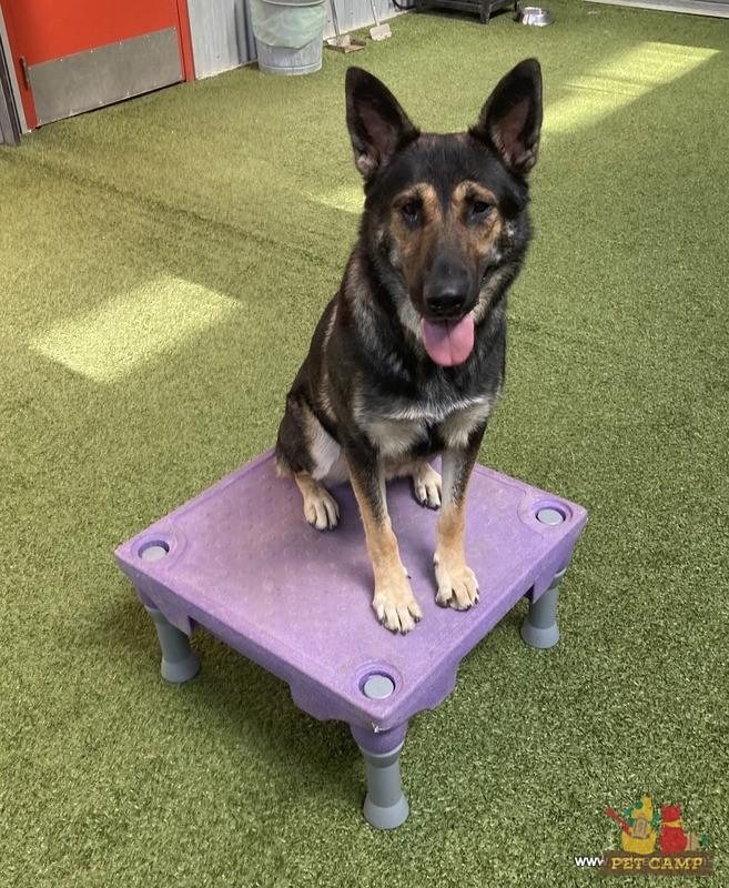 dog training March